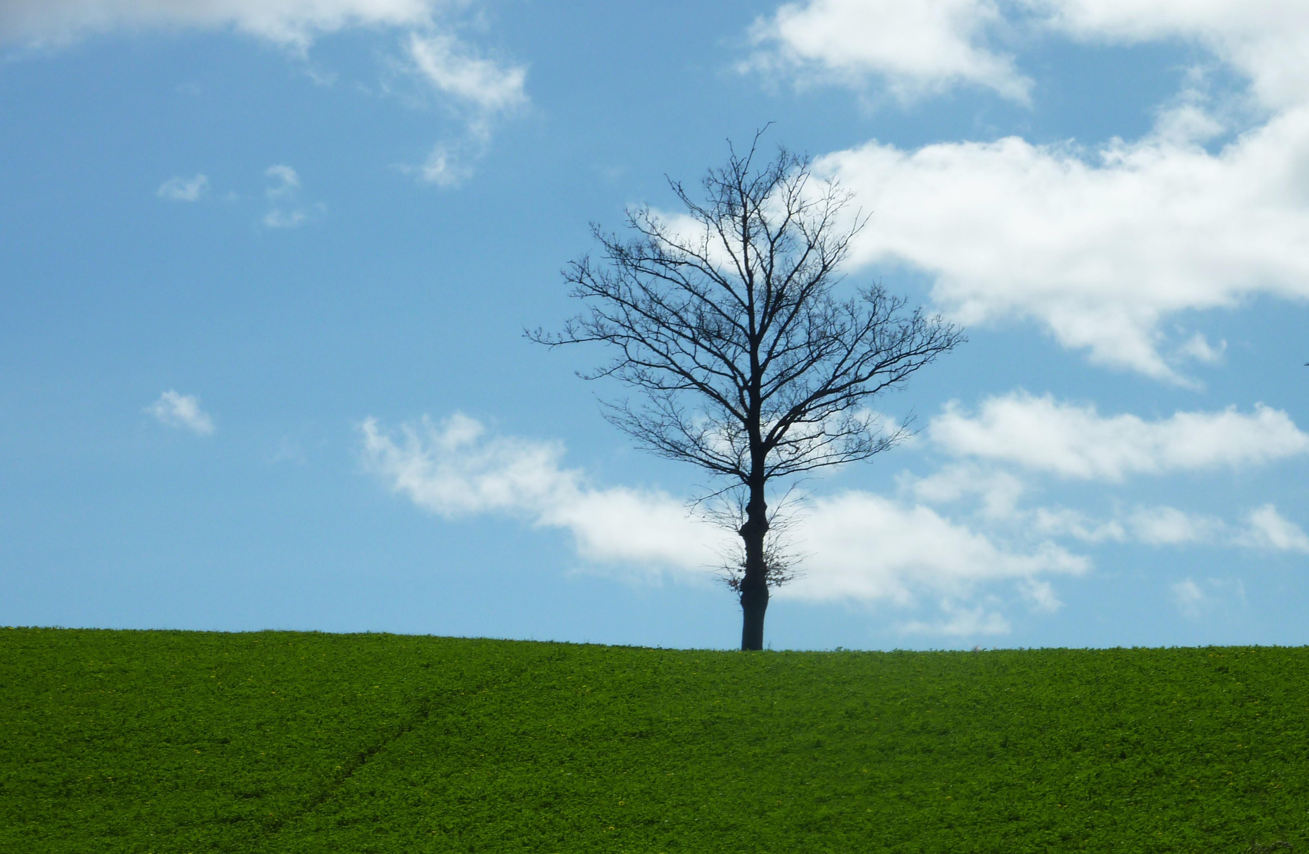 """""""Cinque sensi per un albero"""", un'ode ai fratelli alberi per il bene del Pianeta"""