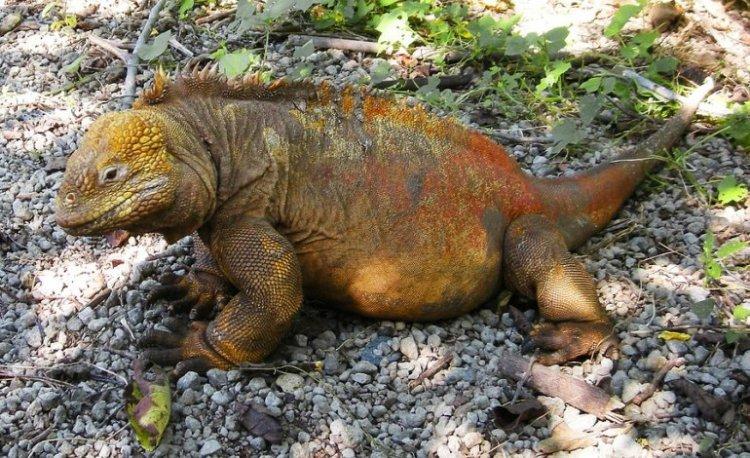 L'esempio virtuoso dell'Ecuador nella protezione delle Galapagos
