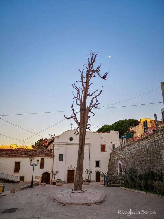 albero san francesco