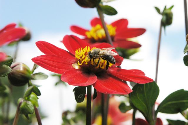 Jam Berapa Lebah Pulang