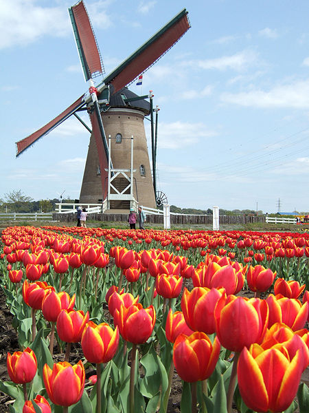 Apa manfaat kincir angin dan bagaimana bisa berputar