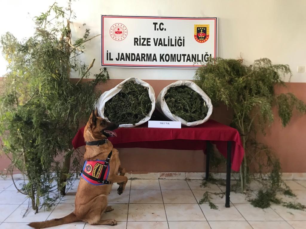 Rize'de jandarmadan uyuşturucu operasyonu