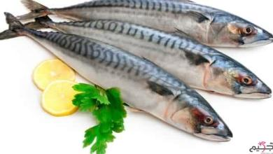 صورة فوائد سمك الكنعد