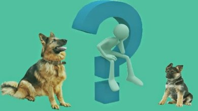 صورة الفرق بين الجرو والكلب في التربية