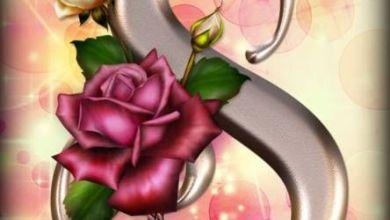 صورة خلفيات ورد للواتس اب , رمزيات زهور , صور حالات واتس اب ورد