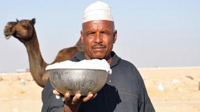 Photo of حليب الإبل , فوائد حليب النوق