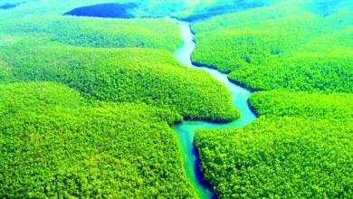 صورة غابات الامازون الممطرة