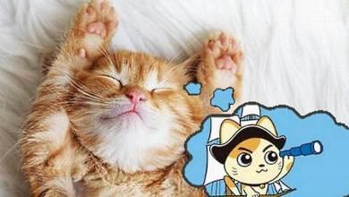 صورة تفسير رؤياء القطط الميته في الحلم , معنى القطة الميته في المنام , رؤية قط ميت في طريقي