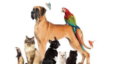 صورة أهمية تربية الحيوانات الأليفة