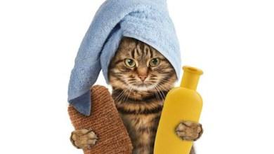 صورة طريقة استحمام وترويش القطط الصحيحة بالصور