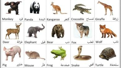 صورة اسماء الحيوانات بالانجليزي مع الصور