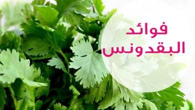 Photo of فوائد البقدونس