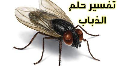 صورة تفسير حلم الحشرات الطائره في المنام