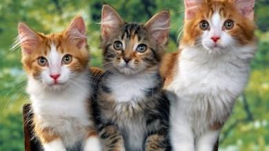 صورة تفسير رؤية القطط في المنام والخوف منها