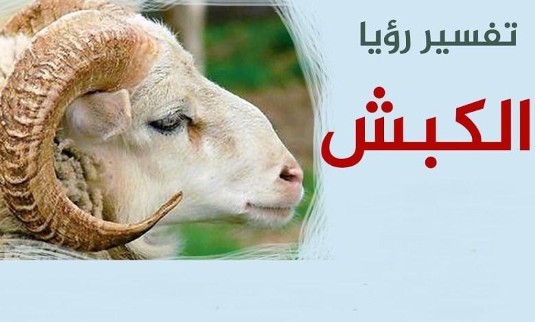 Photo of تفسير رؤية الكبش في الحلم للعزباء والمتزوجة