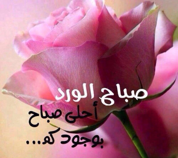 صباح الورد أحلى صباح بوجوكم