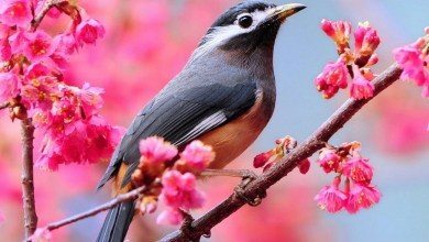 Photo of أقوال في الطيور مكتوبة , كلام عن الطير