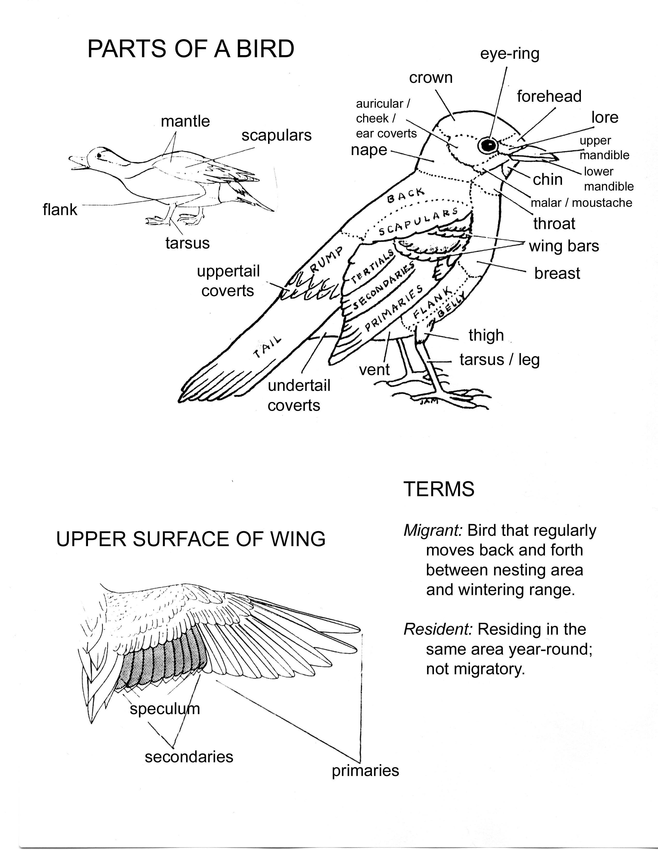 Birds Animal Study