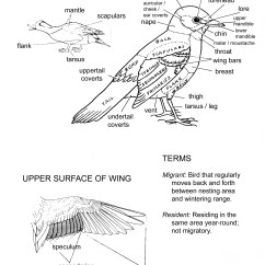 Bird Of Internal Organ Diagram Electrical Wiring Definition Anatomy Birds United Watches