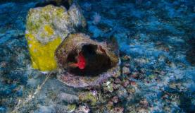 coral_amazonas_greenpeace