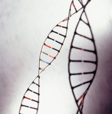 геном, ген, днк, цепочка днк
