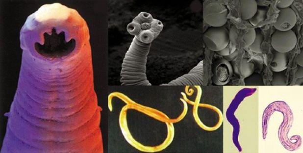паразиты коллаж