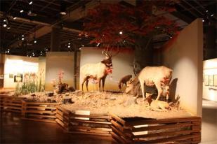 Iowa Historical Museum - Des Moines, IA