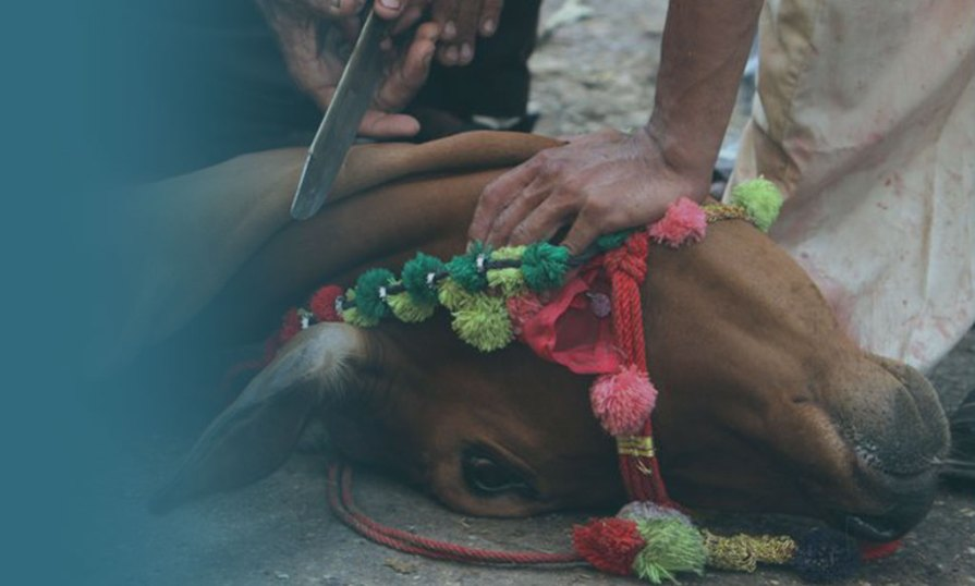 Tradition Of Slaughtering Animals