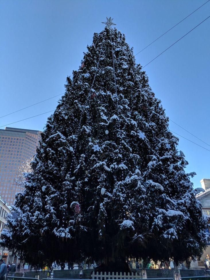 Christmas Tree in Quincy Market