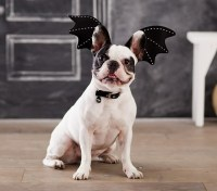 Bat Pet Costume | Pottery Barn Kids