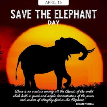 Positive Save the Elephant Day Quotes images Photo