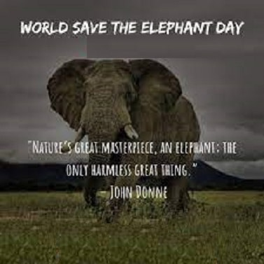 inspiring Save the Elephant Day images Photo Pictures