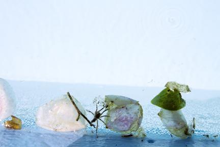 Squandering (Row of petals)
