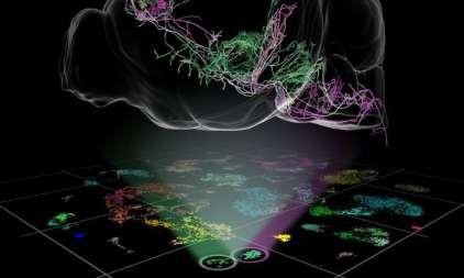 термогенетический интерфейс