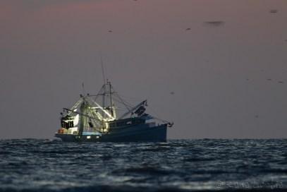 Crevettier partant à la pêche avant le lever du soleil