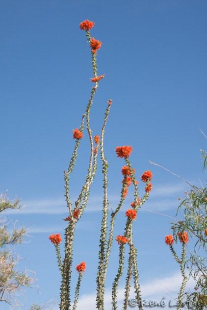 Cactus en fleur au centre d'accueil du Nouveau-Mexique
