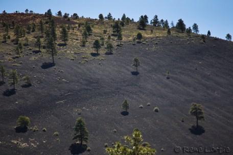 Roches et poussières volcaniques autour de Sunset Crater Volcano. Des pins Ponderosa y poussent.