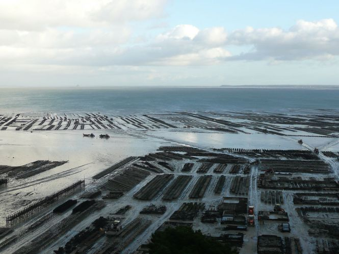 Parc à huîtres de Cancale. On aperçoit le Mont Saint Michel à l'horizon sur la gauche. Photo : Héric Samson, Wikipedia
