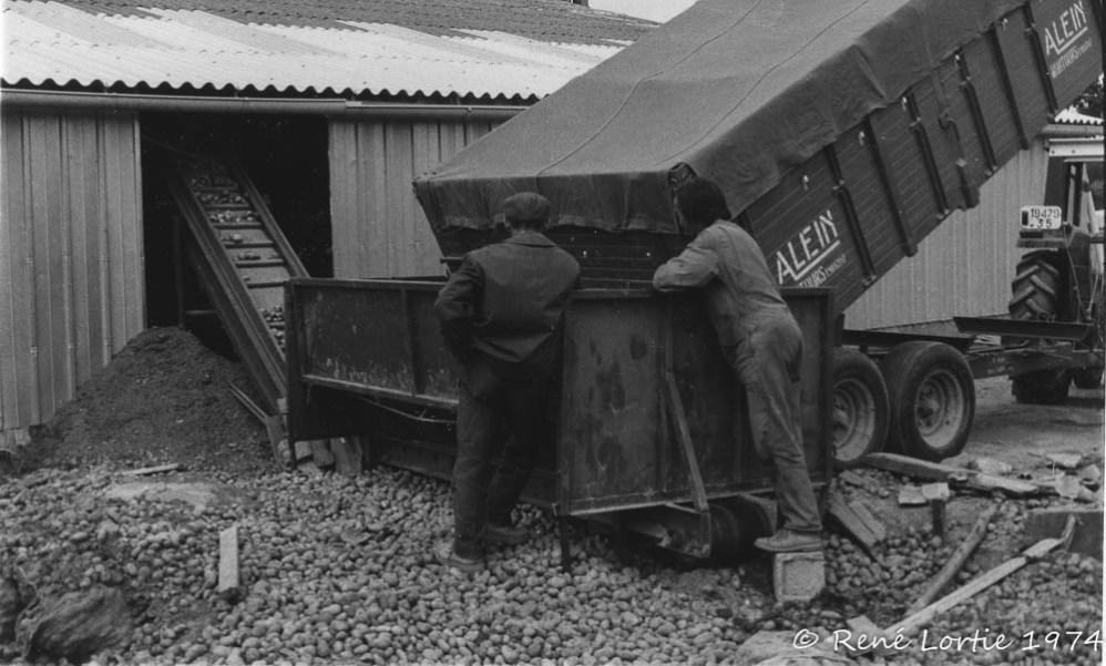 Déchargement des pommes de terre