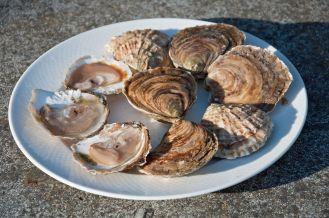 Les fameuses huîtres belons de Cancale