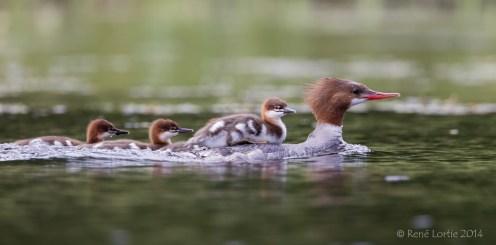 Femelle et ses petits