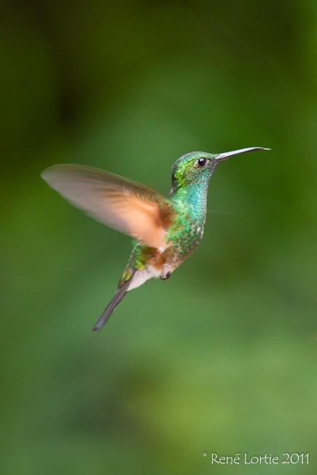 sp - Monteverde, Costa-Rica
