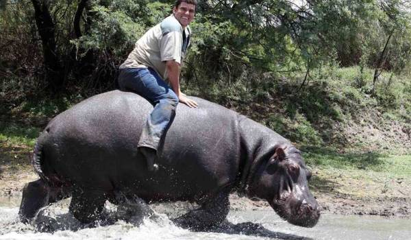 Man bit to death by his 1.2 ton pet hippo