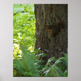 Squirrel Penseur
