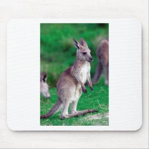 baby kangaroo mouse pads