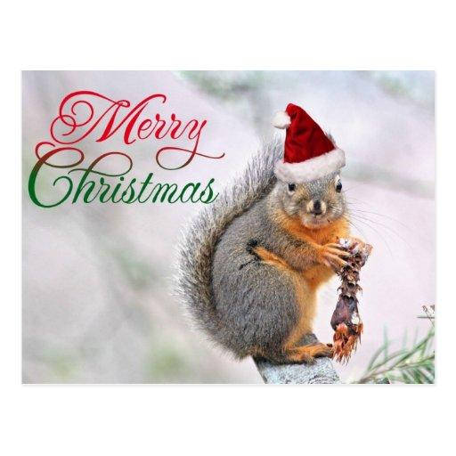 Merry Christmas Squirrel Postcard Zazzle