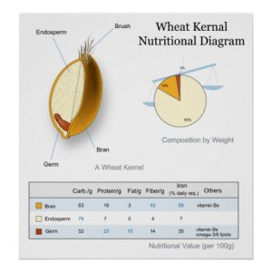 Nutritional Value Diagram of a Wheat Kernal Poster | Zazzle