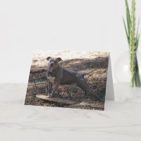 Pitbull Cards Greeting Cards Amp More Zazzle CA