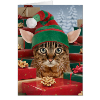 Funny Cat Christmas Cards Photocards Invitations Amp More