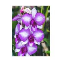 Purple Orchid Canvas Prints & Wall Art | Zazzle.co.nz